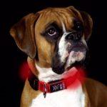 Hund mit leuchtendem Halsband