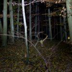 BC25 im Unterholz