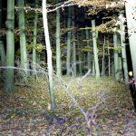 TM11 im Unterholz